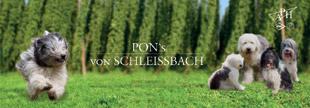 Hundezucht PON's von Schleißbach Mainburg